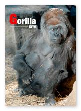 書籍画像「Gorilla」