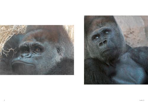 「Gorilla」本文その1