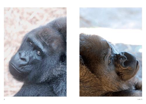 「Gorilla」本文その2