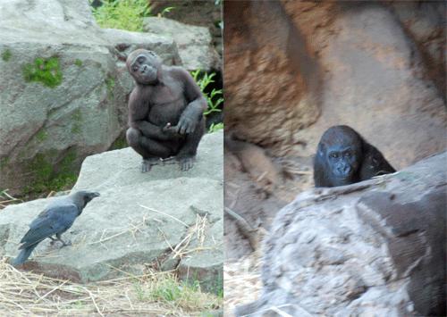 「Gorilla」本文その3