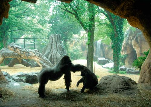 「Gorilla」本文その5