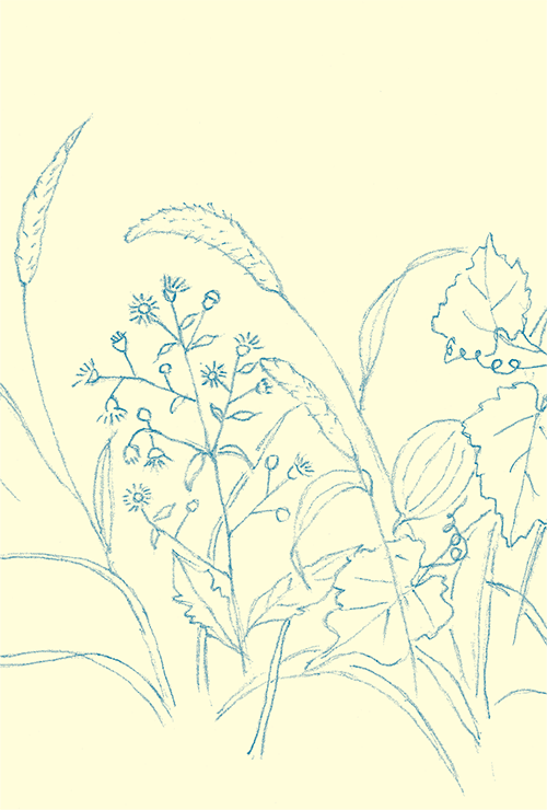 書籍画像「アゲハチョウの羽化」